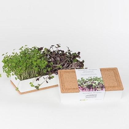 Mini jardin de micro-végétaux a faire pousser