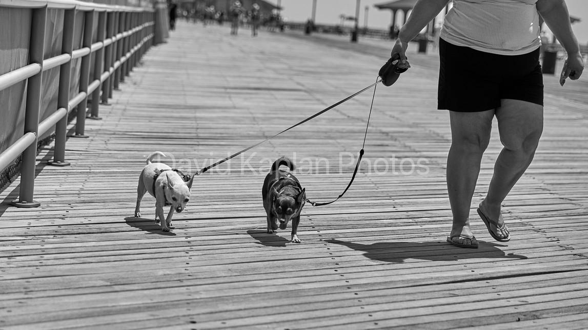 Boardwalk Strollers