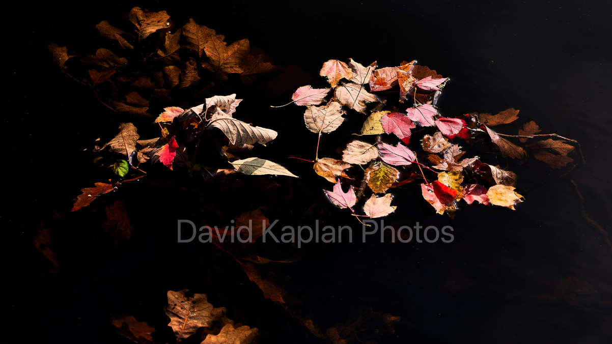 Autumn Floating By