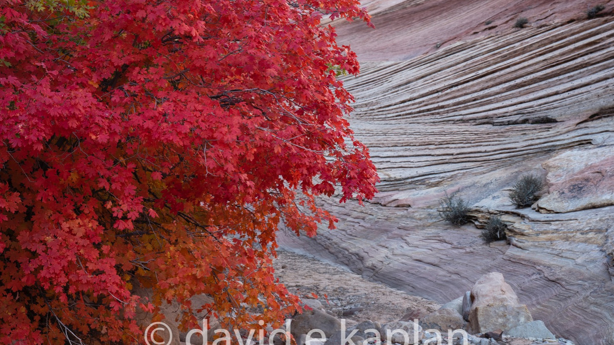 Red Tree Red Rocks