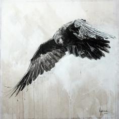 Corvus corone n°4
