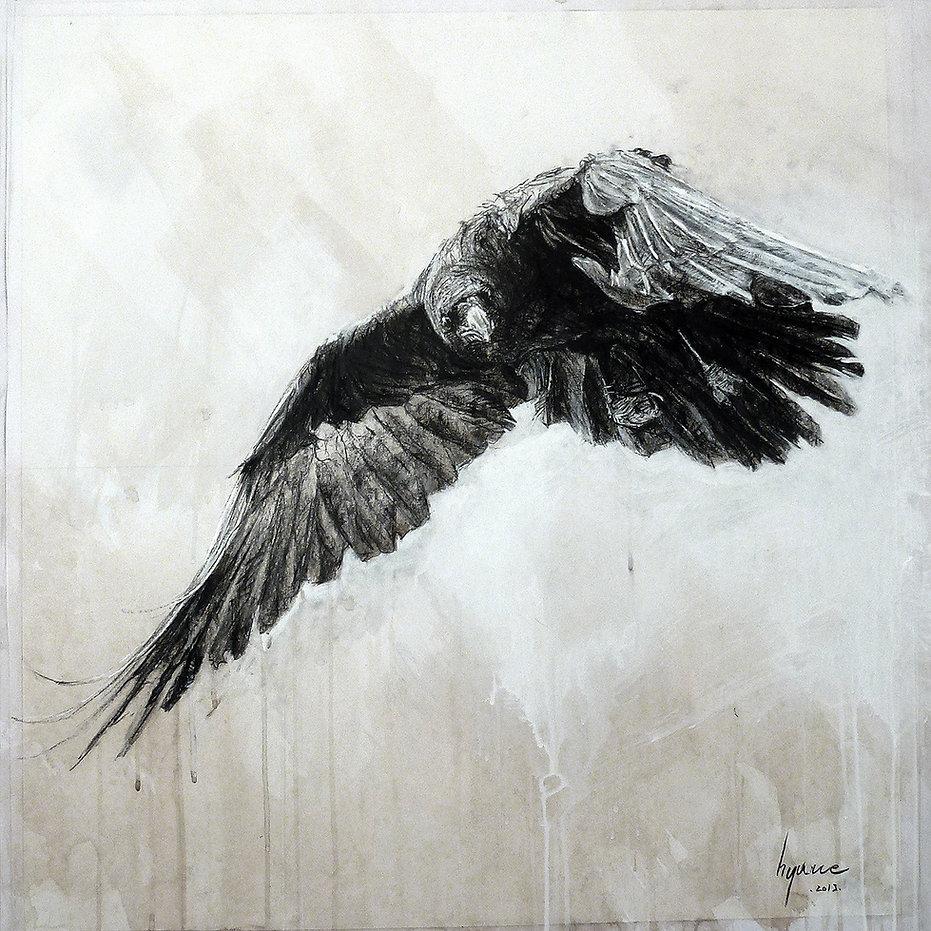 Corvus corone n°4. Hyane. 2019.