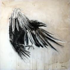 Corvus corone n°3