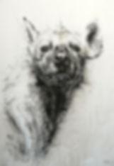 La Meute - Crocuta crocuta n°25 - Hyane
