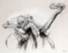 Dessin - Octopus vulgaris - Hyane