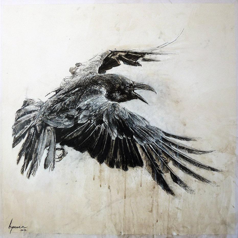 corvus corone 2.jpg