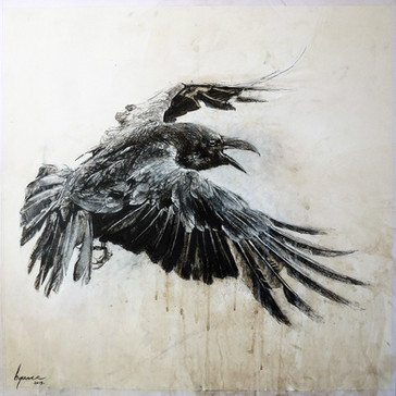 Corvus corone n°2