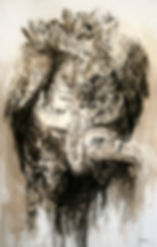 Chorognards -Vautour fauve - Hyane