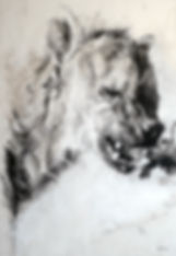 La Meute - Crocuta crocuta n°27 - Hyane