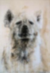 Hyène. Crocuta crocuta n°38