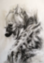 Hyane-Dessin-crocuta 28