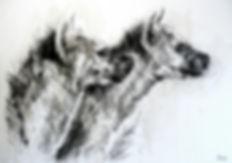 La Meute - Crocuta crocuta n°29 - Hyane