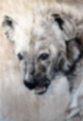 Hyène. Crocuta crocuta n°39