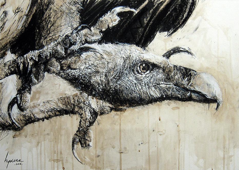 Dessin -vautour de ruppel  - Hyane