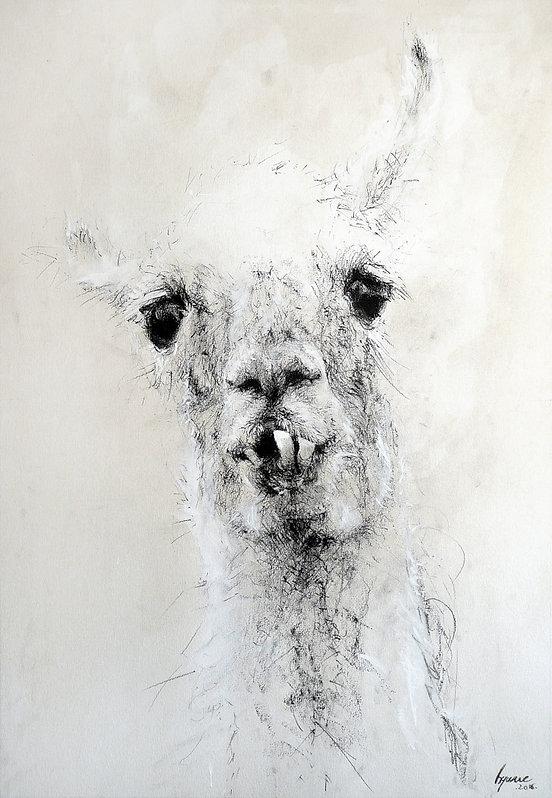 Dessin - Lama glama - Hyane