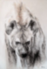 La Meute - Crocuta crocuta n°28 - Hyane