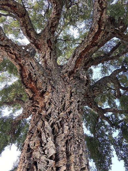 Tree 1.HEIC