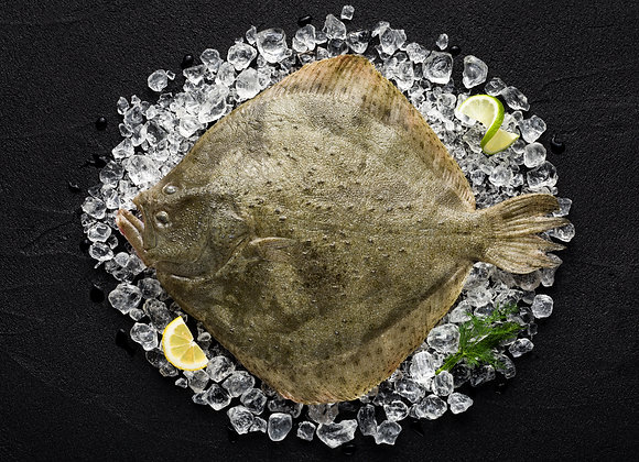 Turbot Fillets