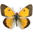 butterfly_day06.jpg