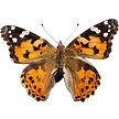butterfly_day07.jpg