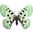 butterfly_day03.jpg