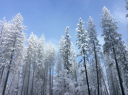 Private, guided snowshoeing adventure along the Mirror Lake Loop in Yosemite Valley in Yosemite National Park. Available for visitors ages 9 and up.