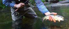 yosemite_fly_fishing