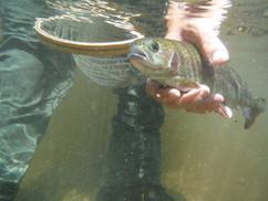 guided_fly_fishing.jpg