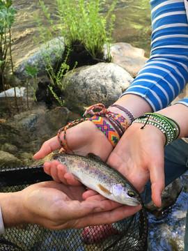 Carlon_falls_rainbow_trout