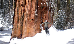 Private, guided snowshoeing adventure into the Tuolumne Grove of Giant Sequoias and a hiking tour in Yosemite Valley in Yosemite National Park. Available for visitors ages 7 and up.
