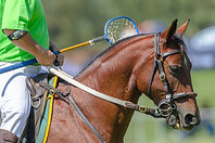 Horse Rider Closeup Unidentified Polocro