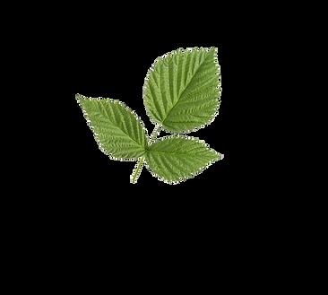 leaff.png