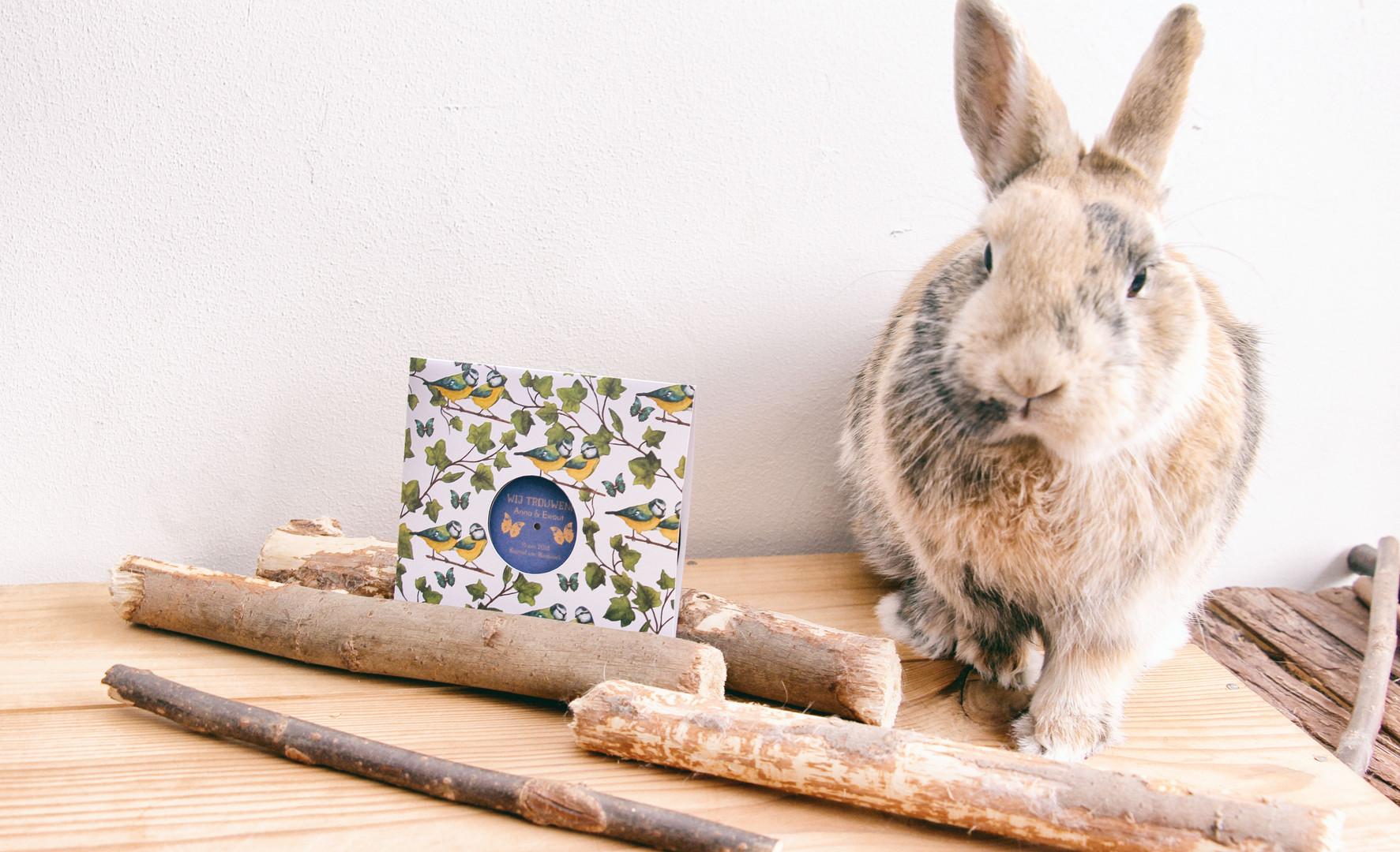 Invitation & Rabbit