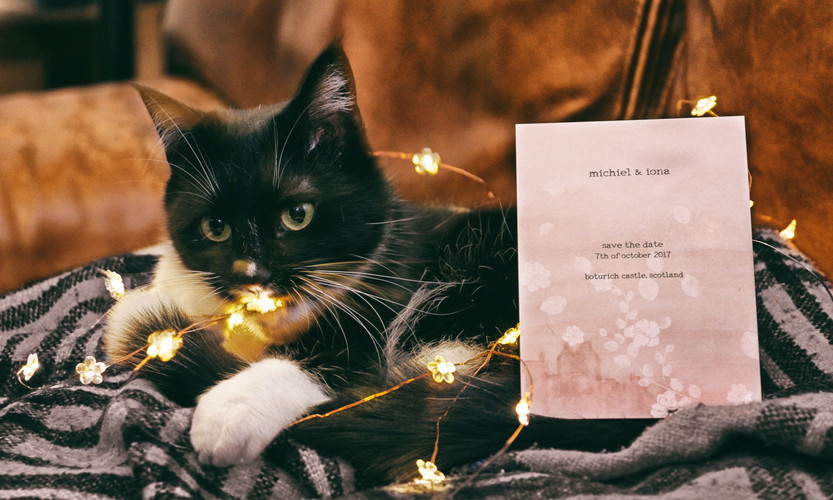 Couple's cat & Save the Date