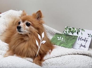 Couple's dog & Invitation