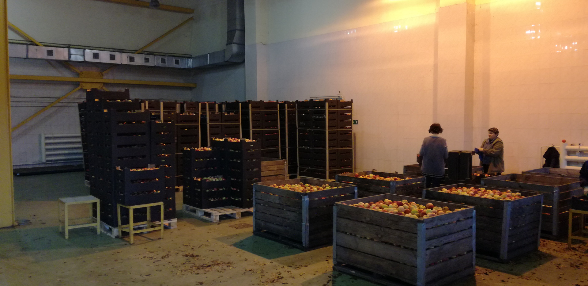 Яблоки фасовка