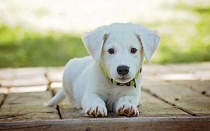 puppy-1903313_1920-1080x675.jpg
