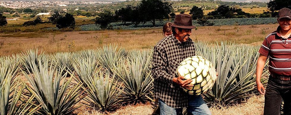Tequila%2520Harvest_edited_edited.jpg