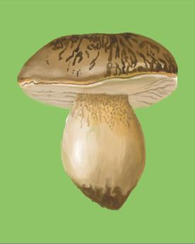 Die Wunderwelt der Pilze