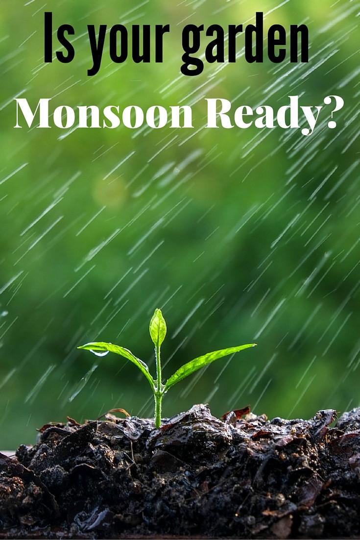 Monsoon gardening tips, Terrace garden designers in Delhi