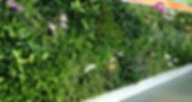 Vertical landscaping, Vertical Garden in Delhi