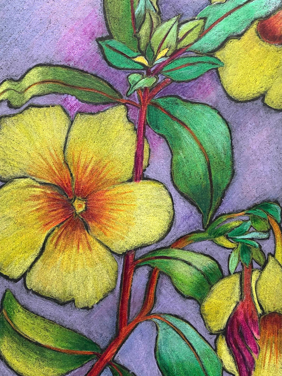 Alamander flowers
