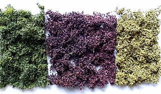 MBS AD-floral-garden-mat-3.jpg