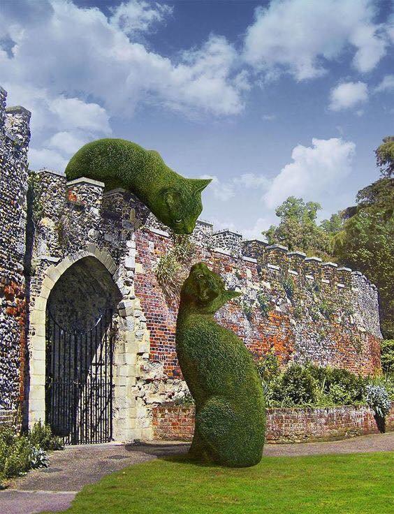 Cats topiary.jpg