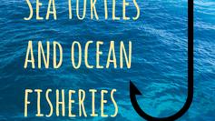 Sea turtles and ocean fisheries