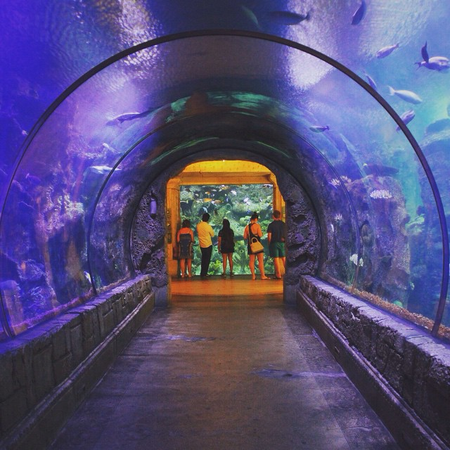 Shark Reef -  #mkexplore  #artofvisuals #aov #visualsgang