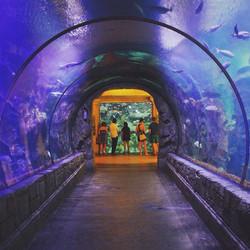 Shark Reef -  #mkexplore  #artofvisuals #aov #visualsgang