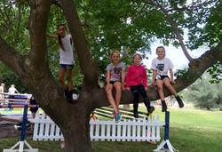 Barn Day tree pic.jpg