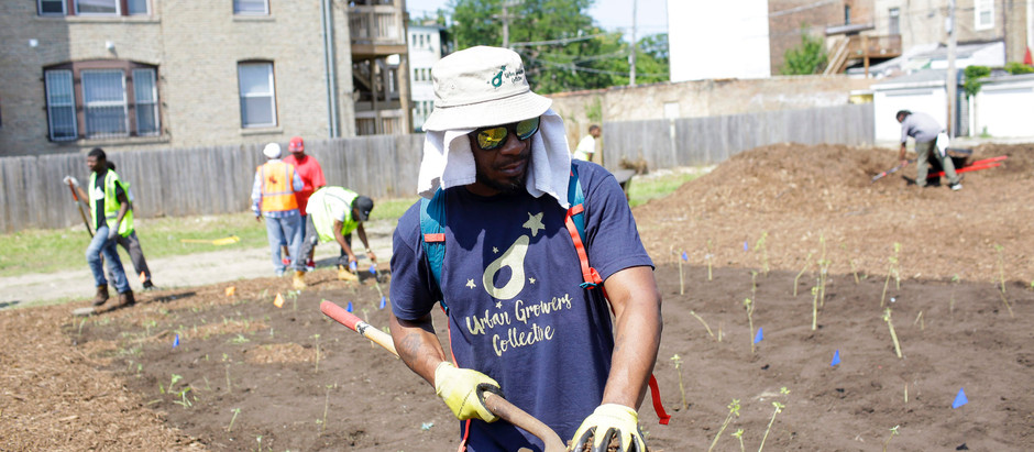 Fighting Gun Violence in Chicago, With Trees, Rakes, and Cleanup Crews