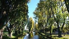 PoplarTrees02